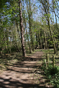 dunwich wood small